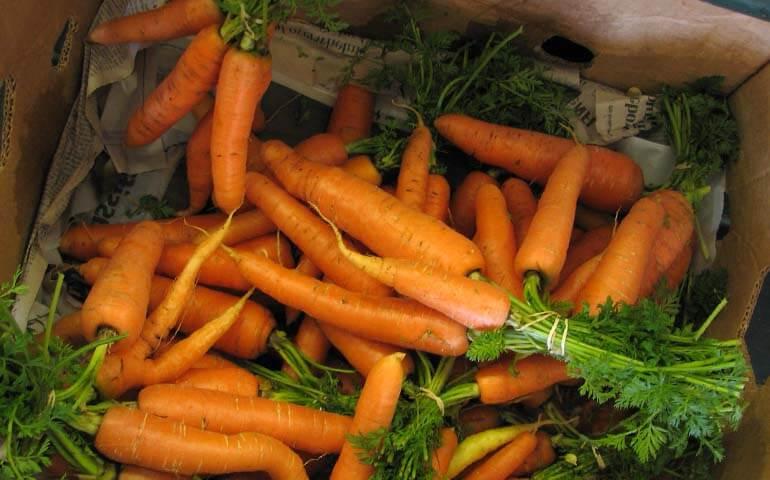 Kak-hranit-morkov-i-sveklu-Morkov